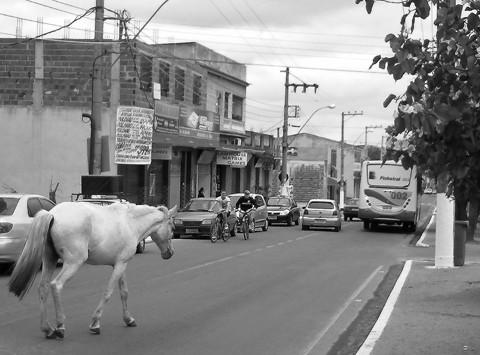 Wandering Horse